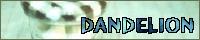 DANDELIONさん